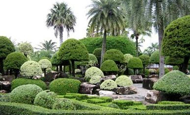 Cây cảnh – làm vườn