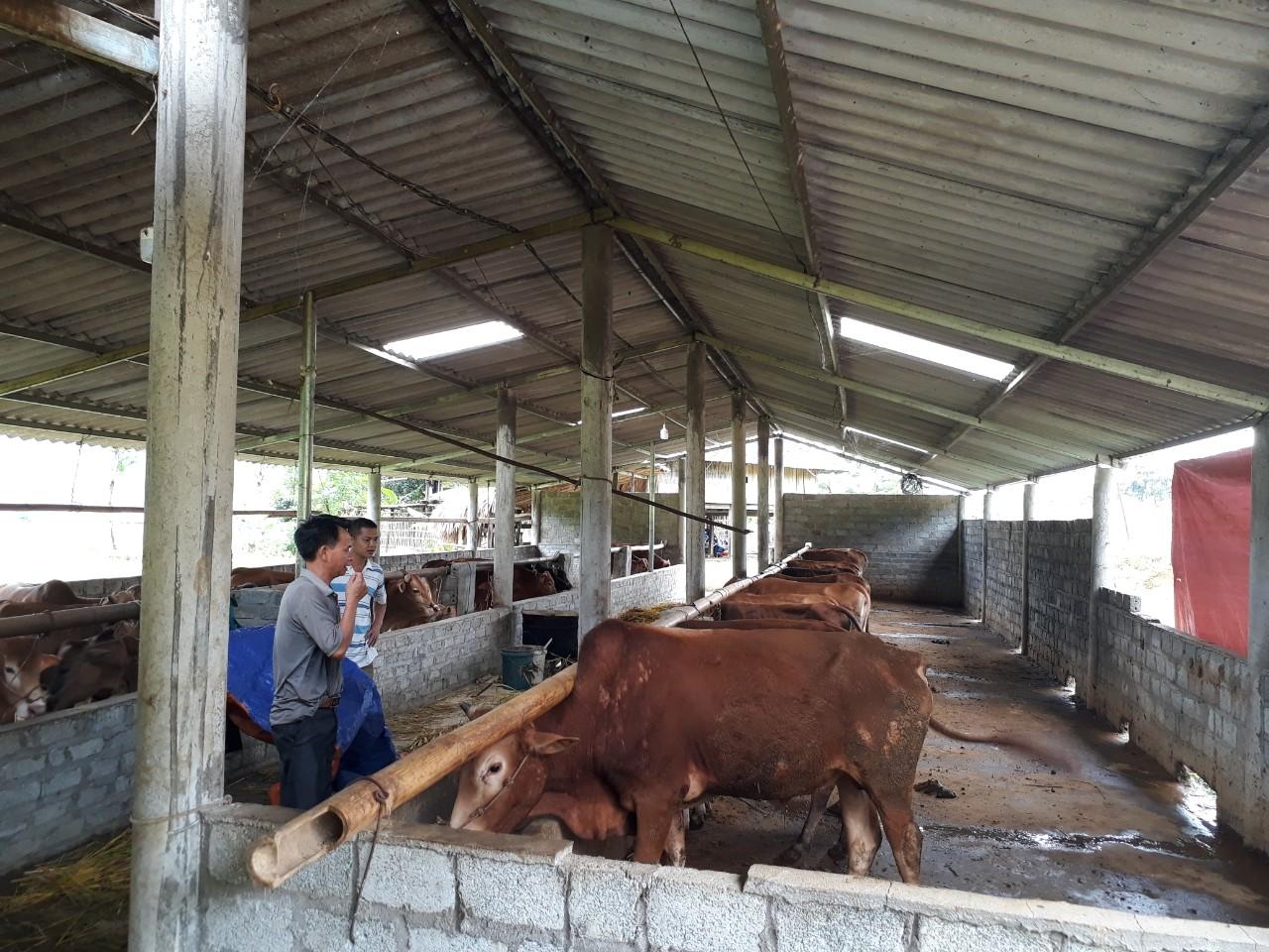 Trang trại bản Kiếng – Khởi nghiệp với mô hình trang trại chăn nuôi tổng hợp tại Hà Giang