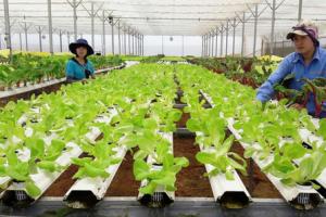 Startup nông nghiệp
